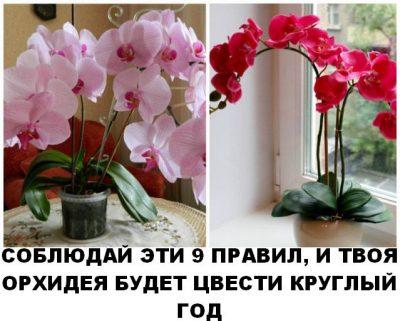Чтобы орхидея цвела КРУГЛЫЙ ГОД