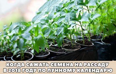 Кто попробует этот способ выращивания рассады — другого уже никогда применять не будет