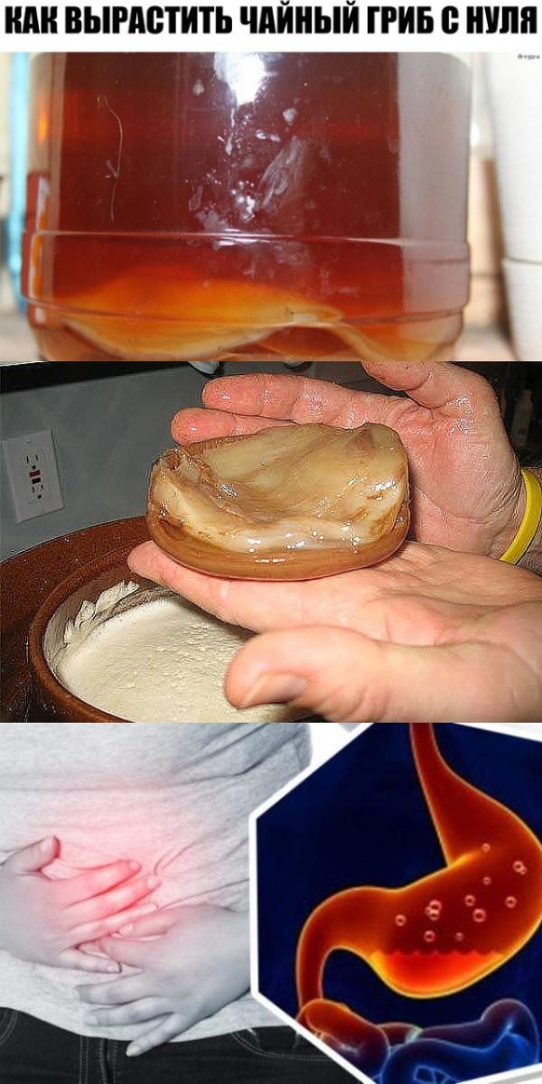 Как вырастить чайный гриб с нуля