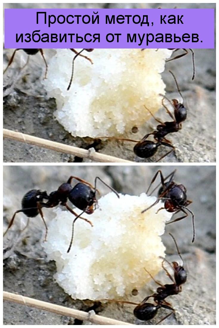 Простой метод, как избавиться от муравьев 4