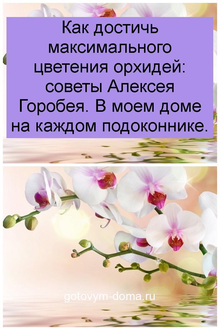Как достичь максимального цветения орхидей: советы Алексея Горобея. В моем доме на каждом подоконнике 4