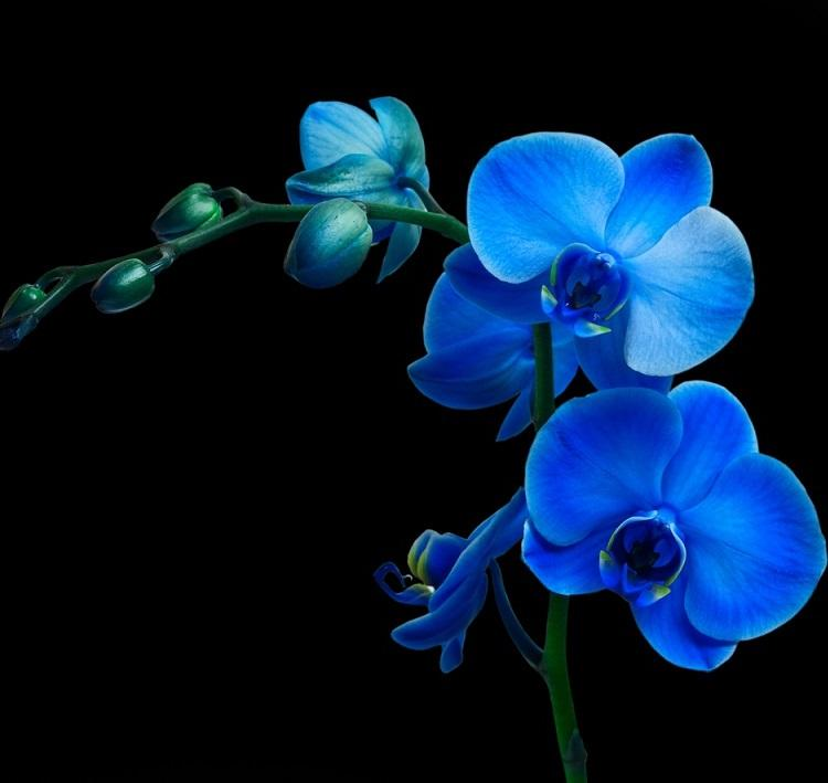 Как достичь максимального цветения орхидей: советы Алексея Горобея. В моем доме на каждом подоконнике 8