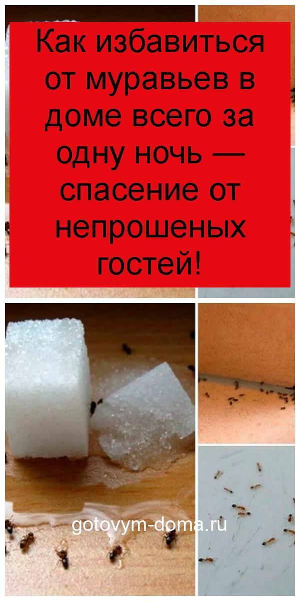 Как избавиться от муравьев в доме всего за одну ночь — спасение от непрошеных гостей 4